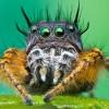 Morphopolis: жизнь насекомых, или гениальная психоделическая игра